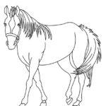 Un caballo para colorear