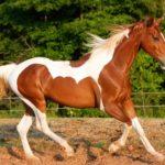 Cuanto vive un caballo