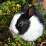 Conejo de tamaño pequeño