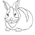 Conejo acostado para colorear