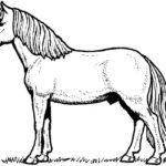 Dibujos de caballo para pintar