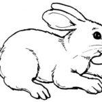 Dibujo de un conejo para pintar