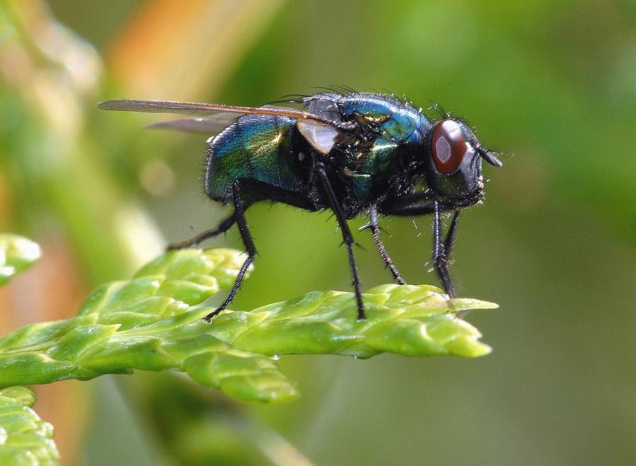 Foto de una mosca en una hoja