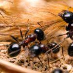 Cuanto vive una hormiga