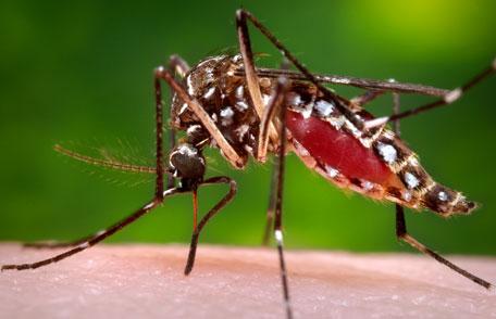 Un mosquito picando