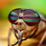 ojos de una mosca de cerca