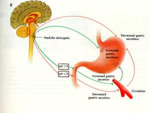 proceso de disgetión