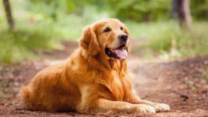 la perra puede quedarse preñada