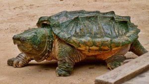 Vida promedio de las tortugas
