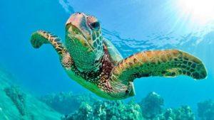 Cuántos años viven las tortugas marinas
