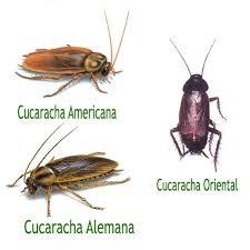 Cuánto vive la cucaracha