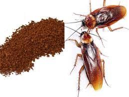 Resistencia de las cucarachas