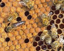 Vida de las abejas
