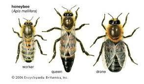 Funciones de las abejas