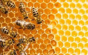 Reproducción de las abejas