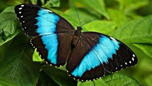 Las mariposas o lepidópteros
