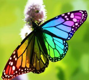 Vida de la mariposa