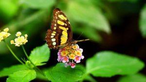 Desarrollo de las mariposas
