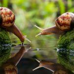Cuánto vive un caracol