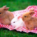 Cuánto vive un conejo enano