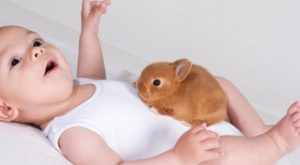 El tiempo que puede vivir el conejo enano