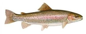 Vida de un pez
