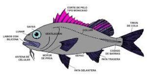 Esperanza de vida de un pez