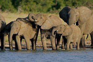 Factores reductores de la esperanza de vida de los elefantes