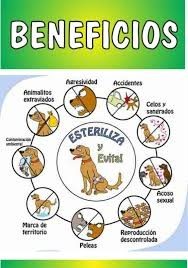 Beneficios de esterilizar