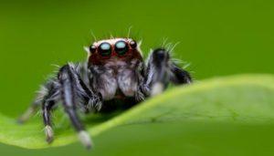 Movimiento de las arañas