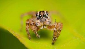 Tipos de arañas y su tiempo de vida