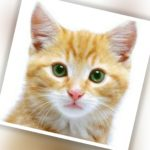 Cuánto dura la vida de un gato