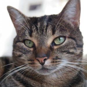 los gatos domésticos tienen más tiempo de vida