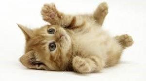 Causas de muertes en los gatos
