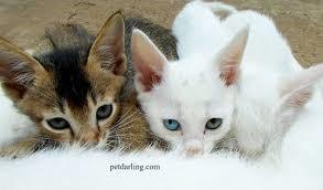 los gatos están expuestos a todo tipo de enfermedades